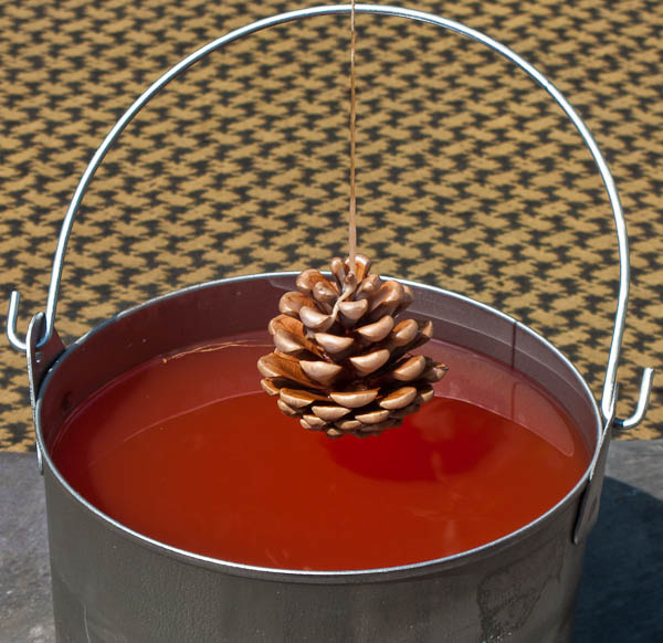 Pine Cone Dipping